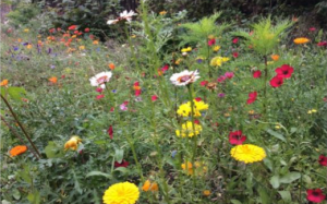Rewilding Gorebridge |  A Kew Gardens Grow Wild Community Project 2018