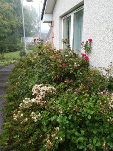 Gardening Update