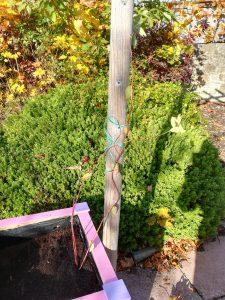 Newbyres Village Garden Update